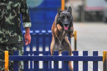 中国南方多地搜救犬云南集训