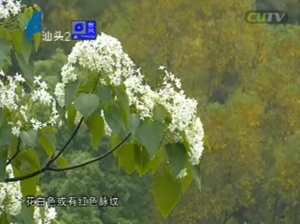 春夏之交赏花时 龙坑山青花更盛 2017-06-12