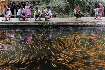 冷水鱼产业不冷 小山村养殖富民
