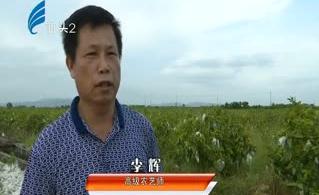 用心种植番石榴 收获硕果在枝头 2017-09-14