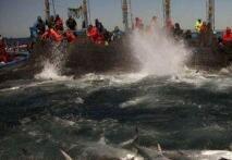 国际刑警组织首次联合全球多机构打击海洋污染犯罪