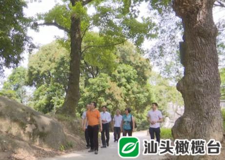 夏天,到普宁洪阳仙步村,行古道、看古枫、游古迹……