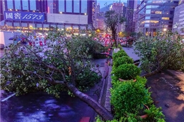 """强台风""""山竹""""袭击香港 大量树木倒塌"""