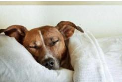 最新研究:睡眠不足6小时增加动脉粥样硬化风险
