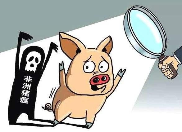 非洲猪瘟防控哪些情形需追究法律责任?官方回应