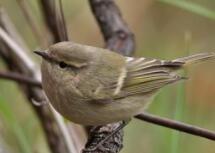 2018年三种鸟类消失 美媒:地球正处于大灭绝时期