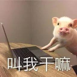 """二师兄有救了!国产非洲猪瘟疫苗已""""在路上"""""""