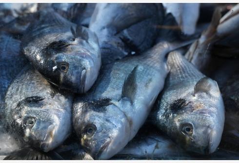 魚油不宜長期服用 亂補不如合理膳食