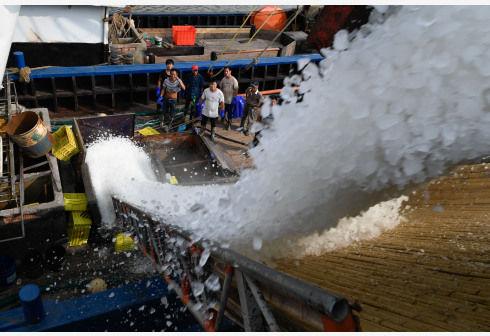 中国东海伏季休渔期结束 浙江沿海全面开渔