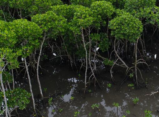 海南澄迈严肃整改富力红树湾项目环保问题 问责11人