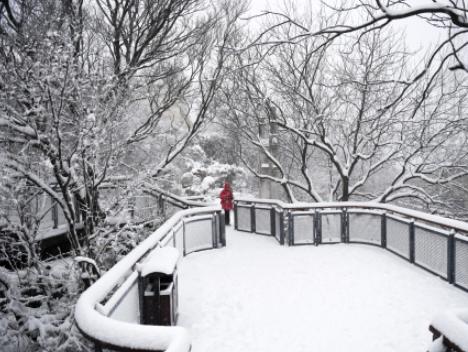 今冬將現60年來最寒冷冬天、最嚴重降雪?氣象專家辟謠