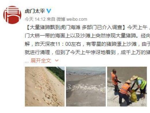 東莞虎門一海灘出現大量豬蹄 多部門介入調查